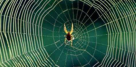 jaring-laba-laba-spider-web