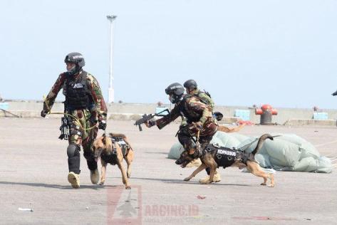 Prajurit Kopassus Bersama Anjing Belgian Malinois pada HUT ke-72 TNI 1