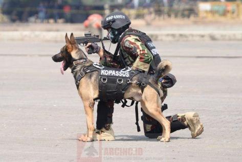 Prajurit Kopassus Bersama Anjing Belgian Malinois pada HUT ke-72 TNI 4
