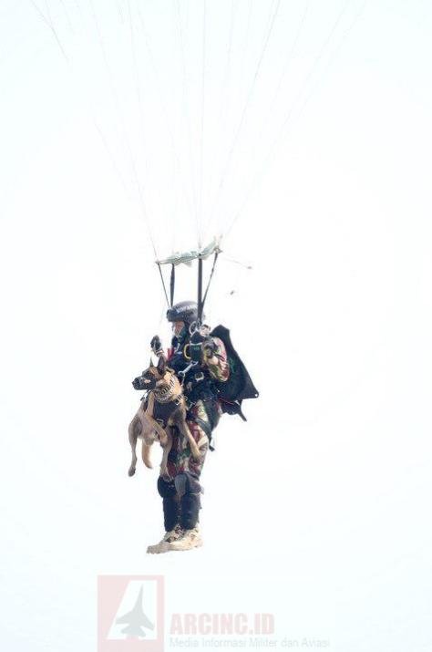 Prajurit Kopassus Bersama Anjing Belgian Malinois pada HUT ke-72 TNI