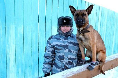 Salah satu anjing penjaga hasil klon laboratorium di Seoul yang dirawat dan dilatih oleh tentara Rusia. (Semyon Grigoryev)